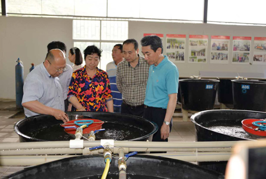 院长(右一)在泥鳅规模化繁育车间察看苗种孵化情况-红河精准扶贫